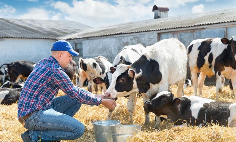 Das Leben und Arbeiten auf einer Farm in Neuseeland ist ein großes Abenteuer. ( Foto: Shutterstock- Jenoche)