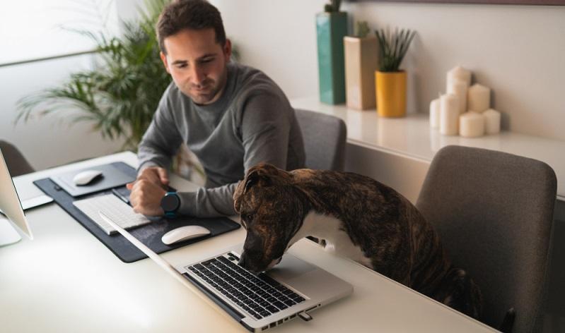 Das Fazit der Studie ging sogar soweit, dass behauptet wurde, dass Hunde im Büro die Zufriedenheit aller Mitarbeiter steigern können. ( Foto:  Shutterstock-Manu Padilla  )