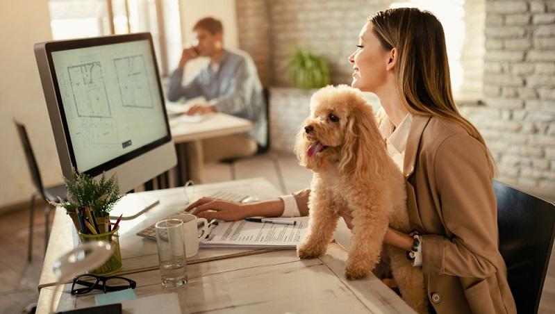 Nicht alle Hunde sind ein idealer Bürohund. Es gibt diesbezüglich durchaus Unterschiede, die auch im Gespräch mit dem Chef relevant sein können. ( Foto: Shutterstock-_Drazen Zigic )