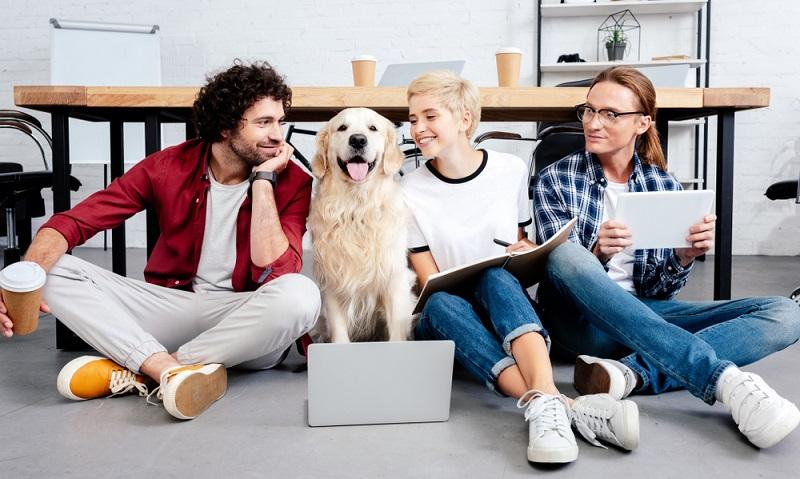 Verschiedene Studien haben es längst belegt: Durch Bürohunde sind wir produktiver bei der Arbeit! ( Foto: Shutterstock-_LightField Studios)