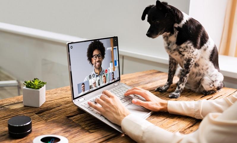 Unternehmen können von nur profitieren, wenn sich Hunde im Büro befinden! Der Grund: Jeder Chef will gesunde Mitarbeiter und die Gesundheit dieser wird wiederum durch den Bürohund gefördert. (Foto: Shutterstock-_Andrey_Popov )