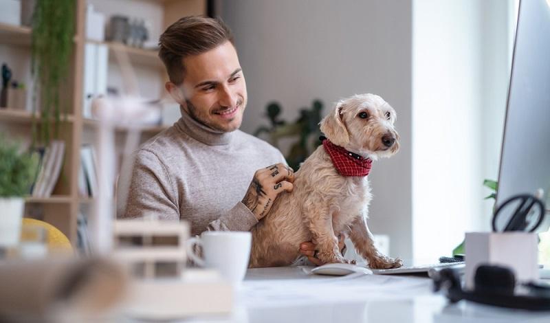Als Hunde für das Büro eignen sich vor allem Rassen, die sich sehr am Menschen orientieren. ( Foto: Shutterstock- Halfpoint)